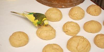 Попугай страшно любит тесто и муку