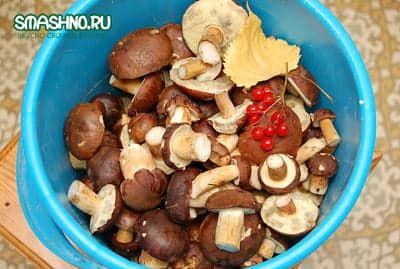Для маринования годятся только молодые грибы