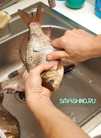 http://smashno.ru/wp-content/uploads/2011/11/Karasi-3.jpg