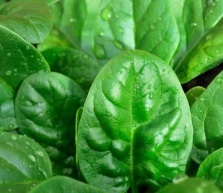 промытые листья шпината