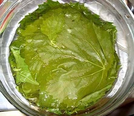 виноградные листья, помытые и отваренные в кипящей воде 2-3 минуты